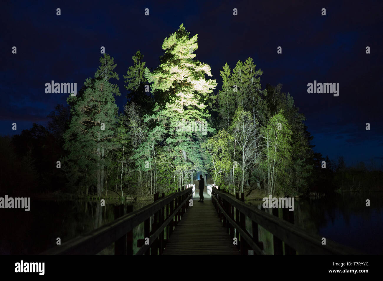 Man standing outdoor at dark night shining with flashlight. Mystical and abstract photo of Swedish nature and landscape. - Stock Image
