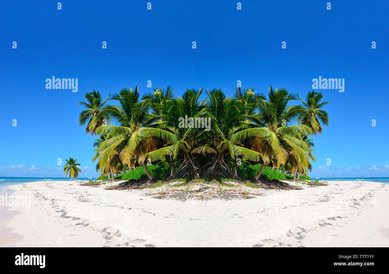 Nice palm trees on a white sand beach, under a blue sky. Caribbean Sea coast - Stock Image