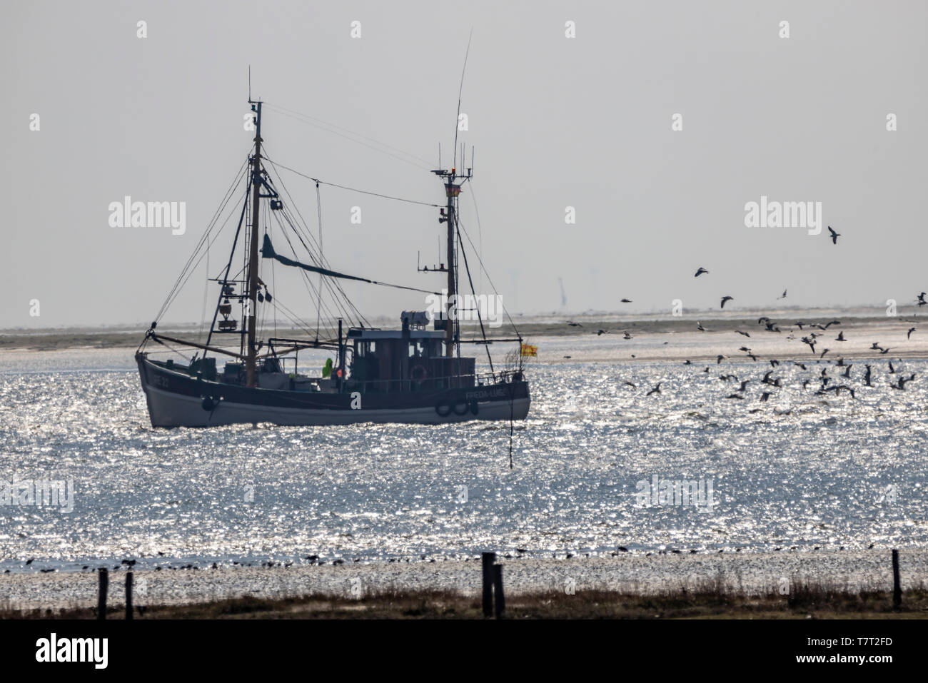 North Sea island Juist, East Frisia, shrimp cutter in the Wadden Sea, Lower Saxony, Germany, Stock Photo