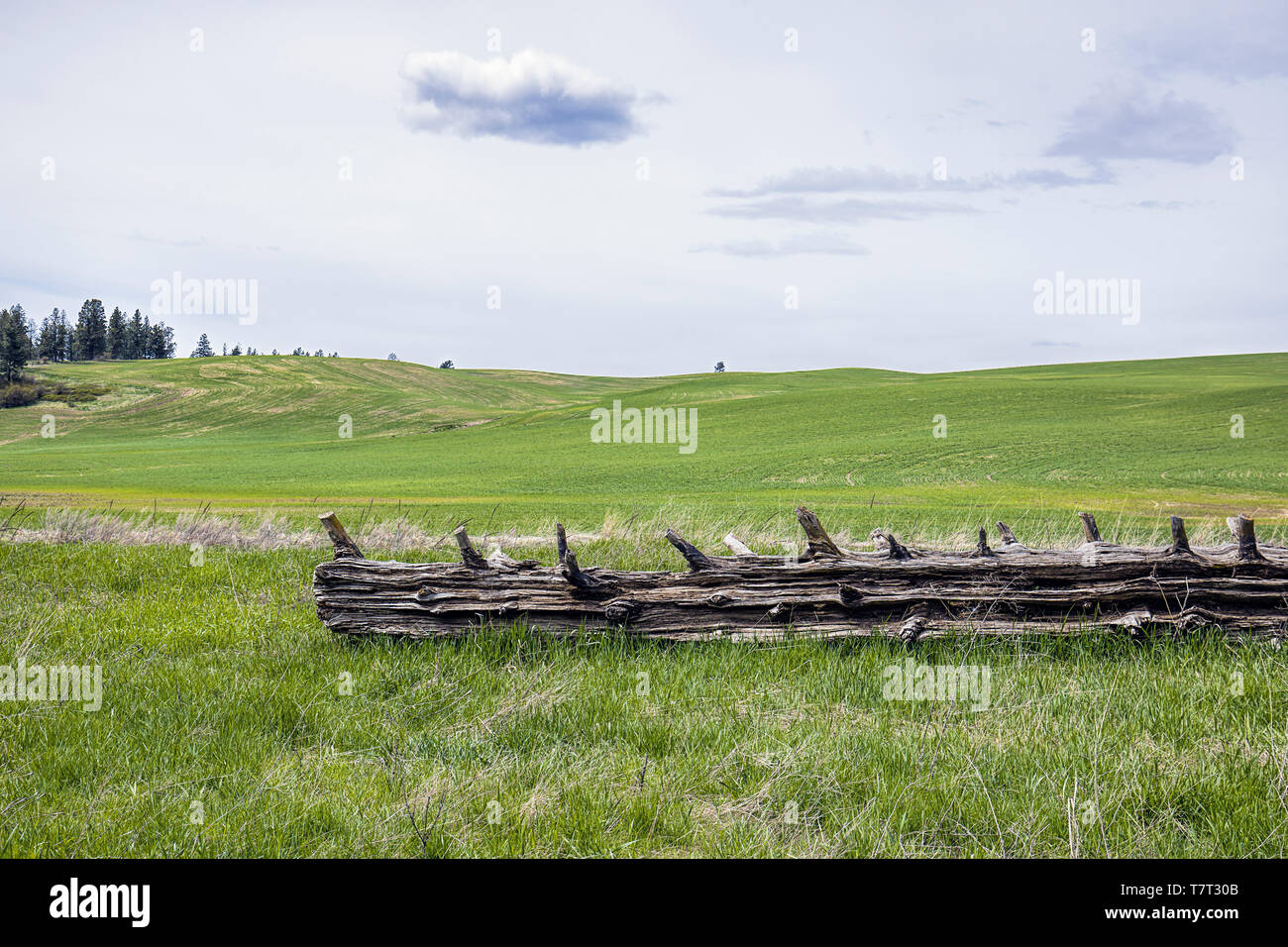A fallen log lays in the foreground of a large grassy field in eastern Washington. Stock Photo