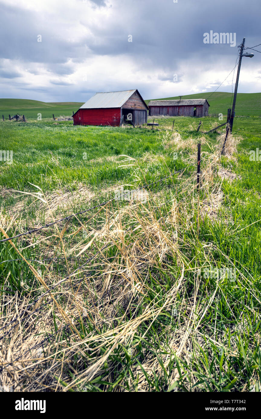An old red barn in a grassy field in the palouse region of Washington. - Stock Image
