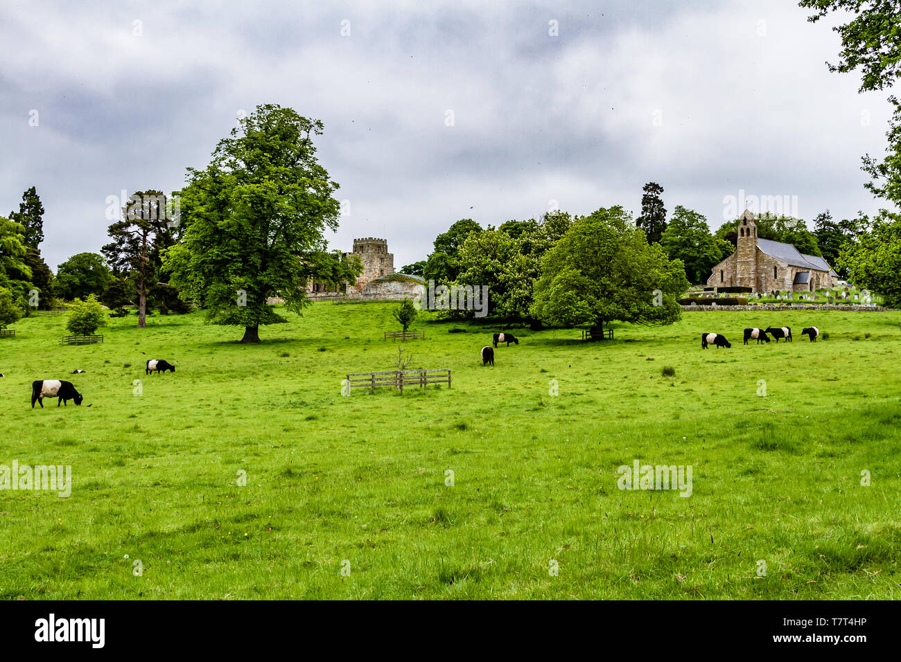 Ford Castle and church of St Michael and All Angels, with Belted Galloway cattle in the foreground. Village of Ford, Northumberland, UK. May 2018. Stock Photo