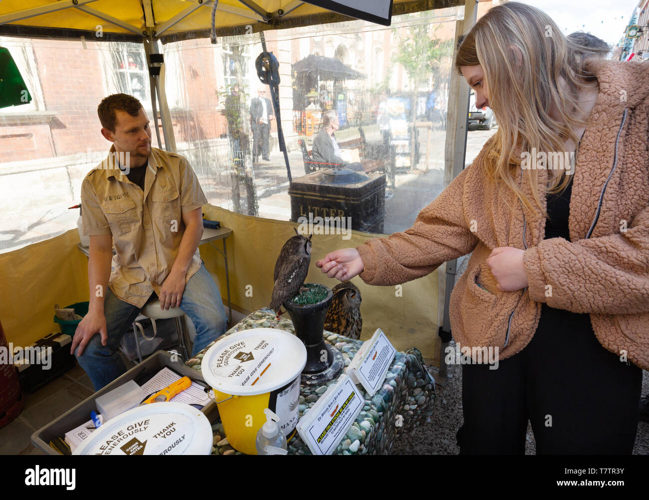 People looking at owls at a charity Birds of Prey Rescue stall, Worcester Worcestershire UK - Stock Image