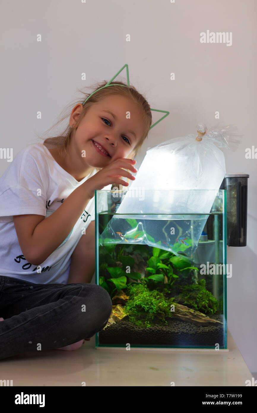 buying a new fish for a nano aquarium - Stock Image
