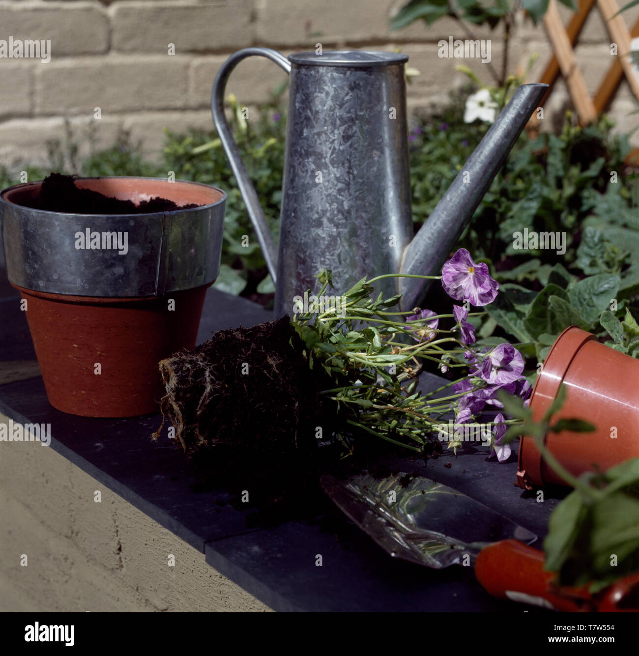 Galvanized watering can and plastic flowerpots - Stock Image