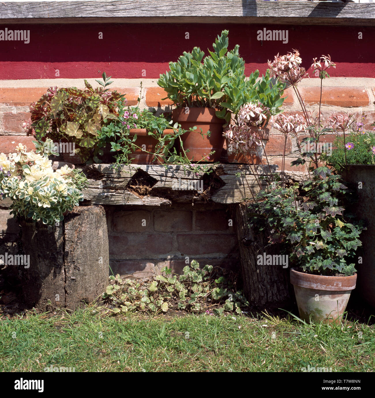 Tremendous Pots Of Geraniums And Succulents On Rustic Wooden Bench Caraccident5 Cool Chair Designs And Ideas Caraccident5Info
