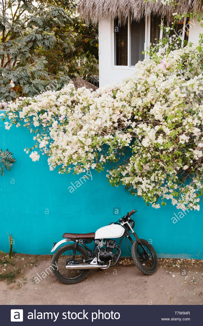 Motorcycle leaning against turquoise wall below flowering ivy, Mexico - Stock Image