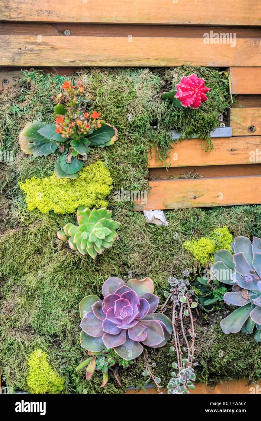 Wooden Vertical Garden Pallet Growing Succulents Stock Photo Alamy