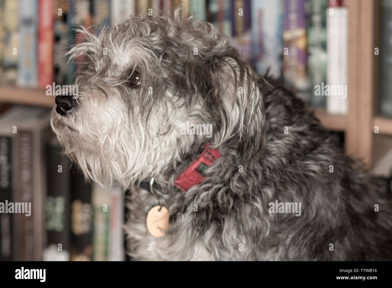 An educated dog Stock Photo