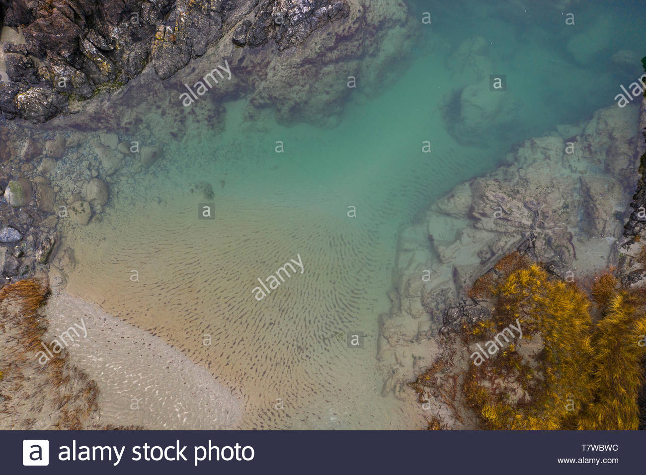 Drone point of view rugged ocean tidal pool, British Columbia, Canada - Stock Image