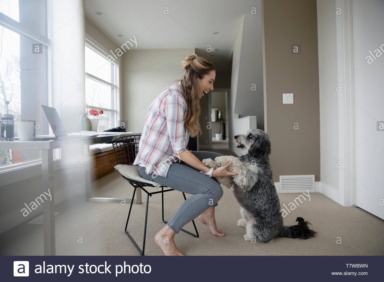 Happy woman playing with dog - Stock Image