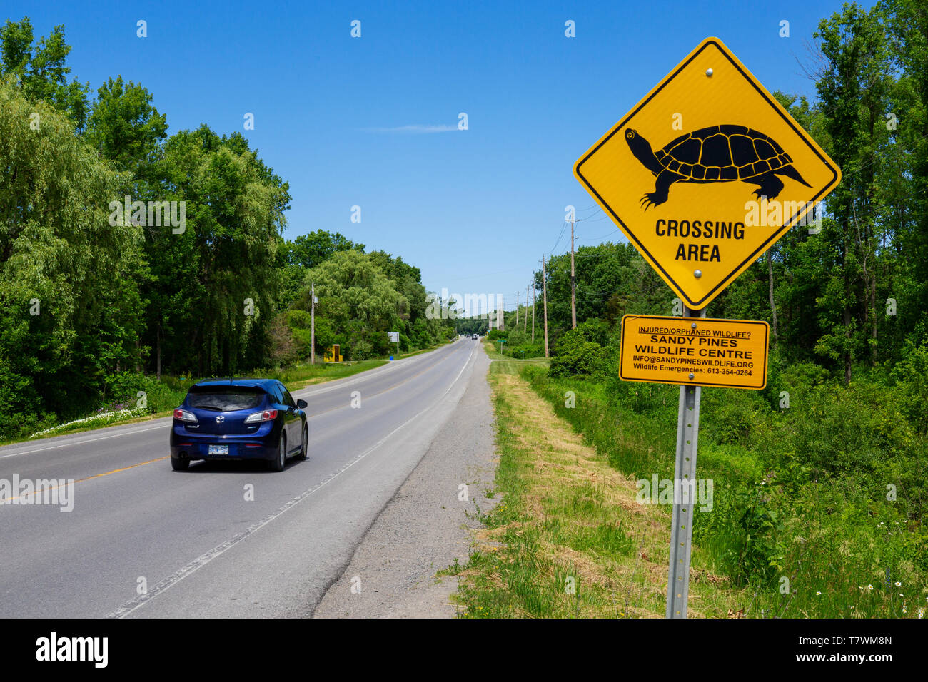 Canada, Province of Ontario, prince Edward County - Stock Image