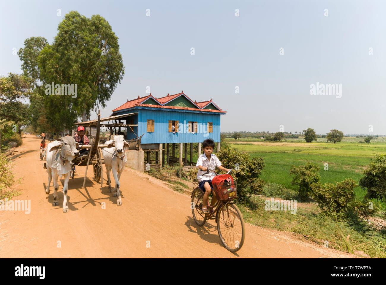 Cambodia, Kampong Chhnang, Kampong Tralach, Along the Tonle Sap River, landscape of rice fields in Kompong Tralach Krom - Stock Image