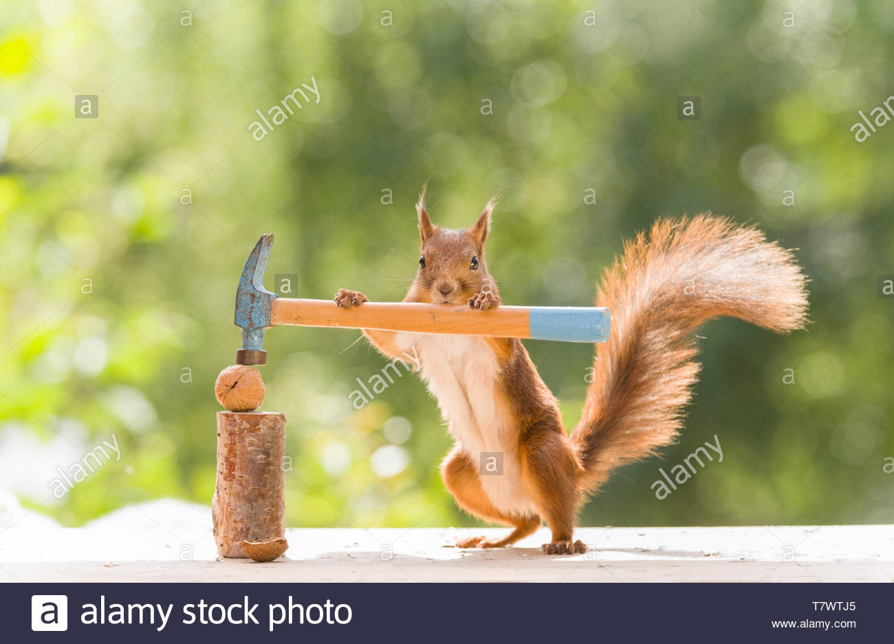 Hammer And Nutcracker High Resolution Stock Photography and Images - Alamy
