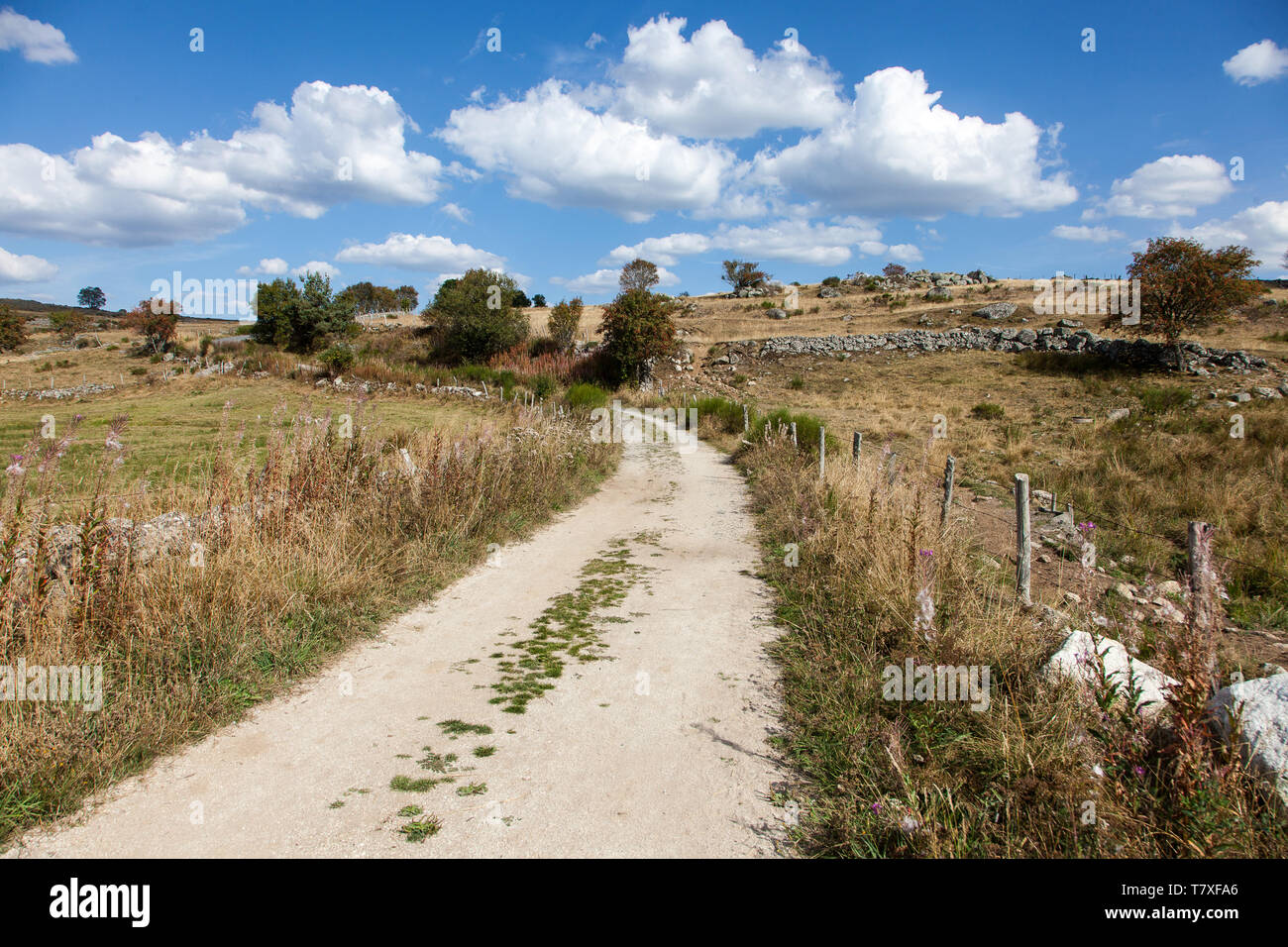 On the Way of St James (Santiago de Compostela), in the Aubrac area: country lane - Stock Image
