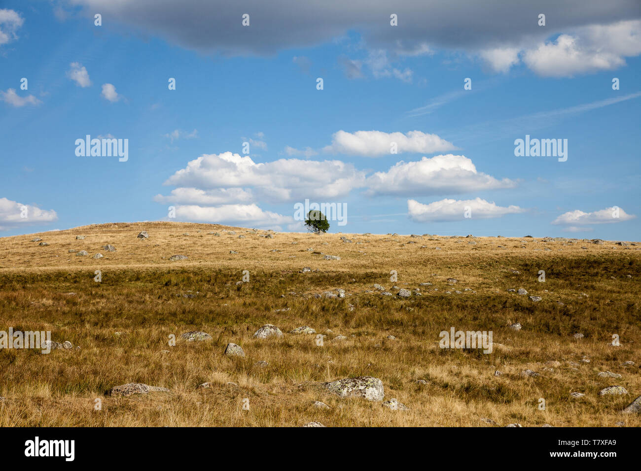 Landscape of the Aubrac high plateau, along the Way of St James (Santiago de Compostela): country lane - Stock Image