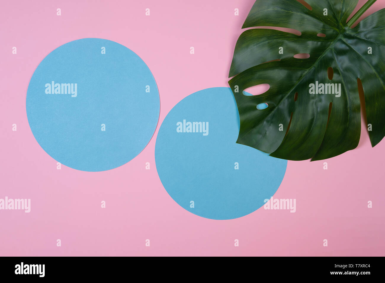 Green tropical monstera leaf on pink background with copy space. Art concept - Stock Image