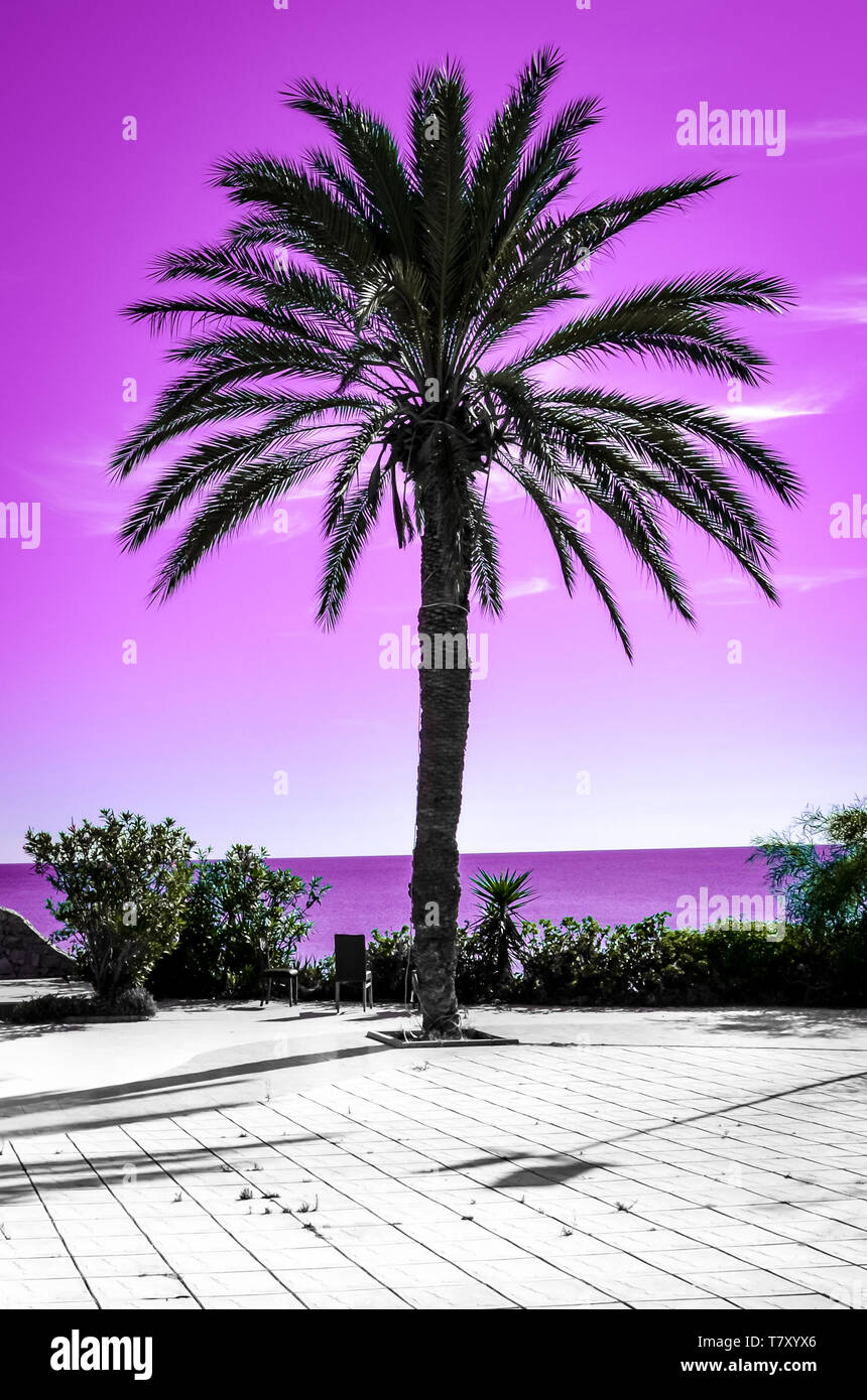 Palm tree silhouette with pink sky and sea in the background. Different kind of wallpaper with gradient colors evoking summer vibes and vacation feelings. Stock Photo