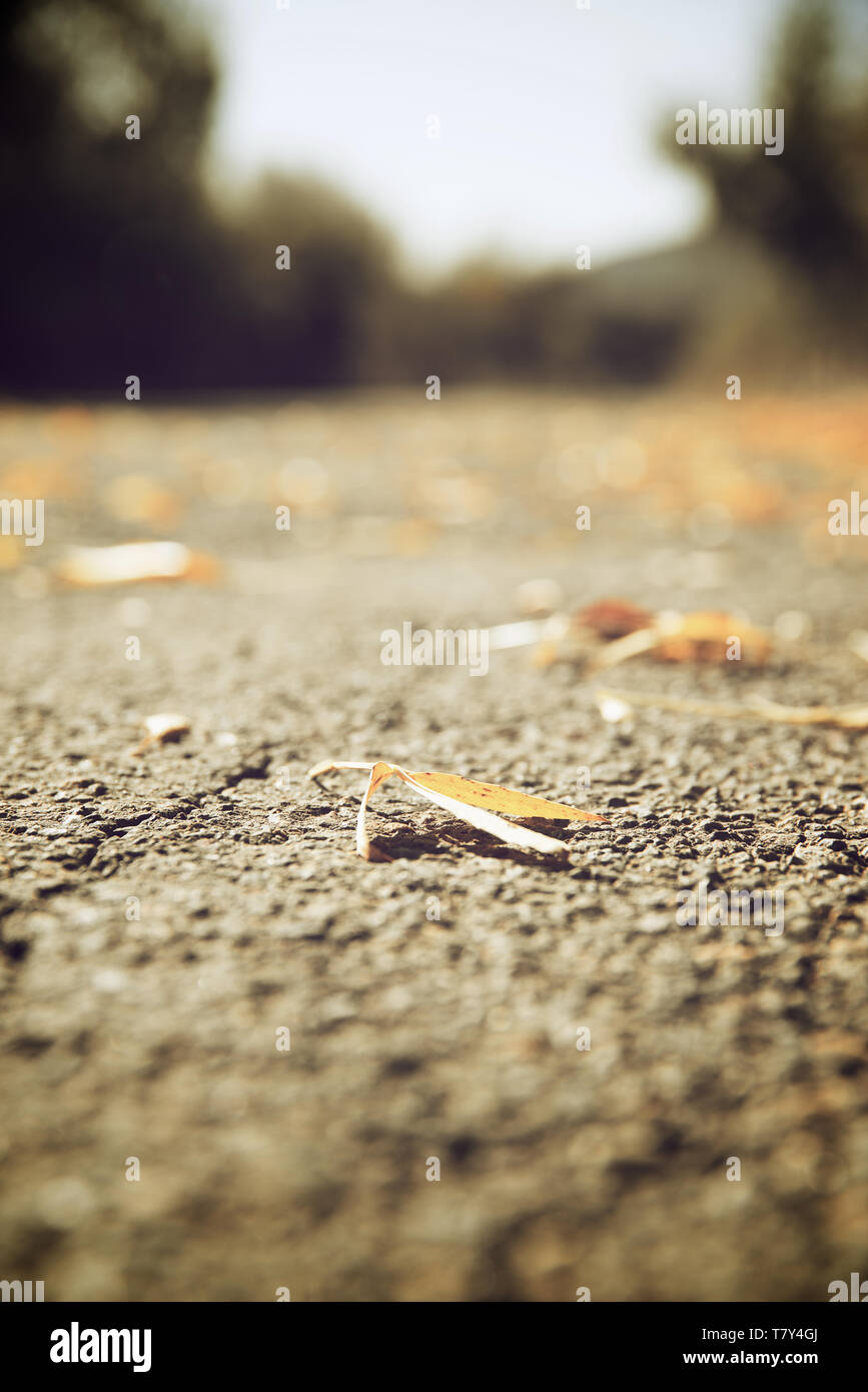 Fallen leaves on the edge of a highway in Spain. Stock Photo
