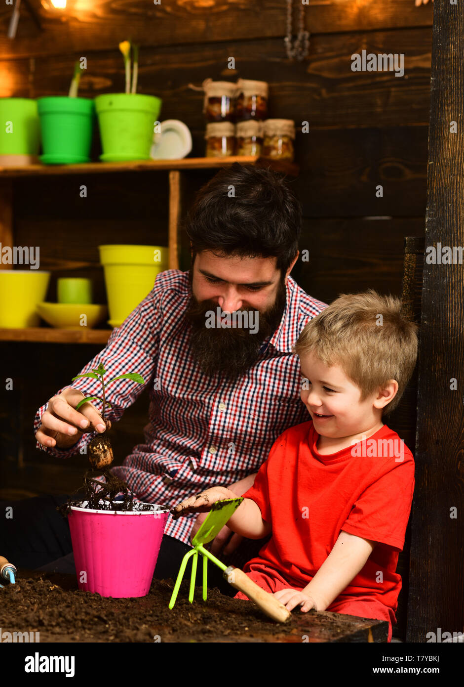 Father and son. Family day. Greenhouse. bearded man and little boy child love nature. happy gardeners with spring flowers. Flower care watering. Soil - Stock Image