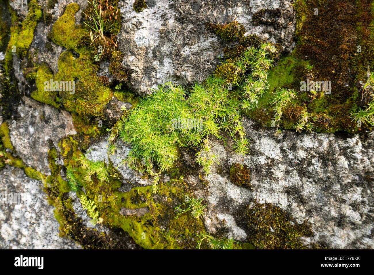 Green Moss On A Rock Outdoor Stock Photo 245849623 Alamy