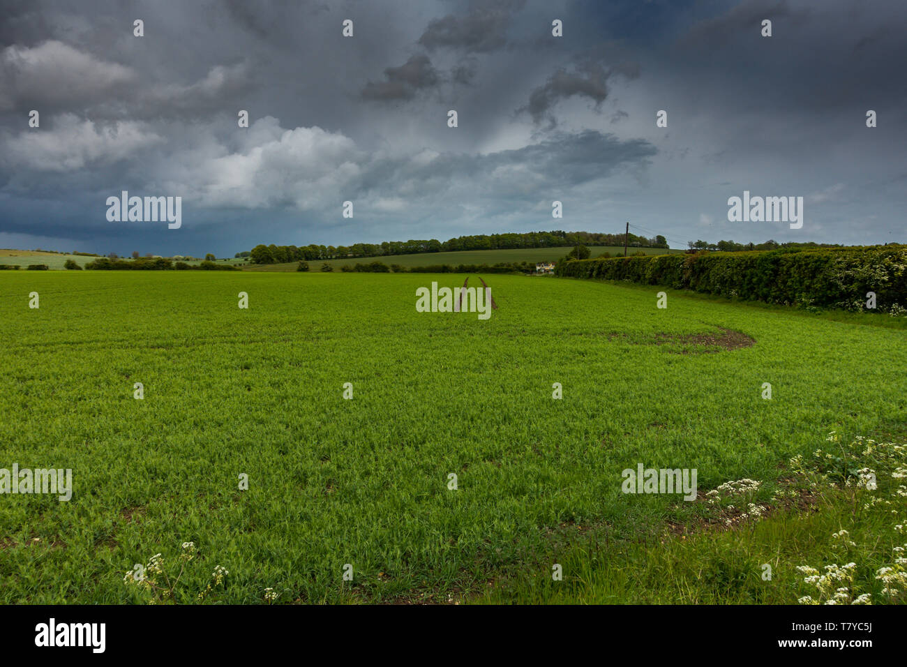 Heavy weather over the Hertfordshire countryside near Ashwell in the UK. Heavy grey skies and green arable land. Stock Photo
