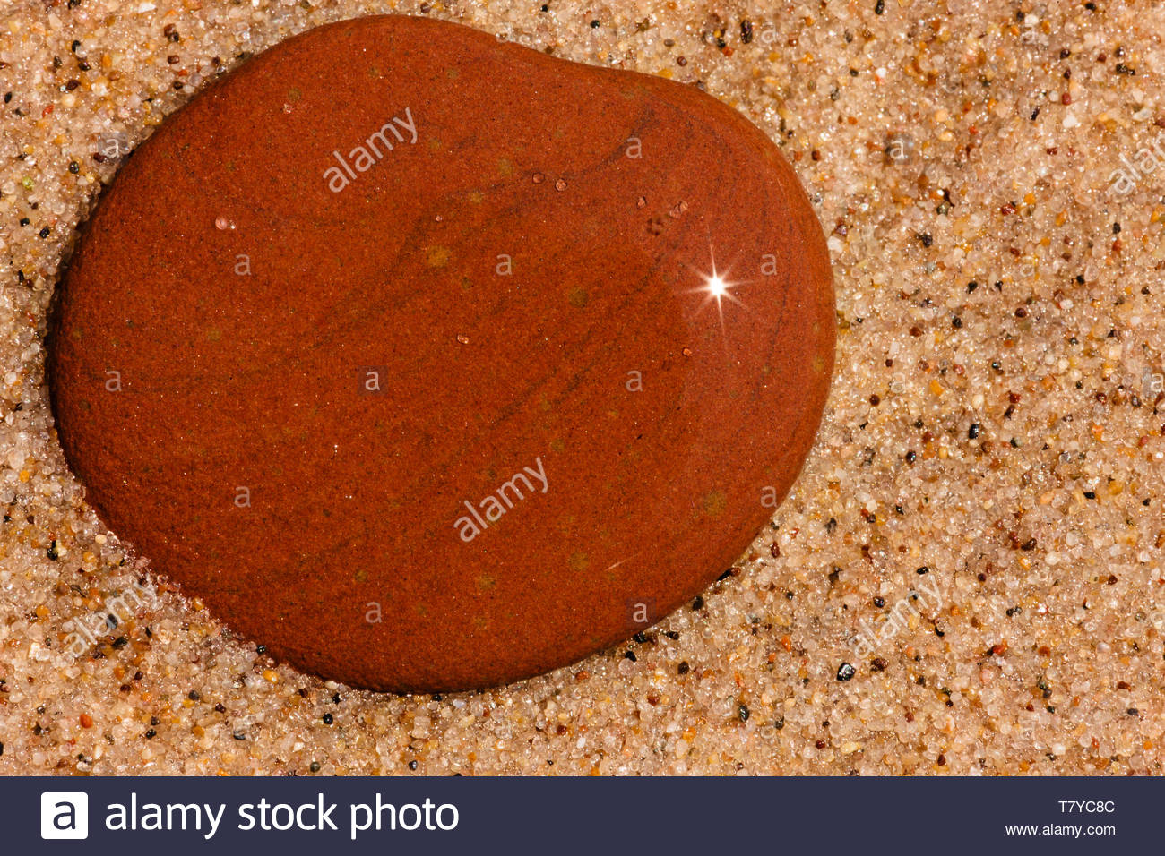 Sunstar bounces off a wet stone on the beach at Kohler-Andrae State Park, Sheboygan, Wisconsin in late July - Stock Image