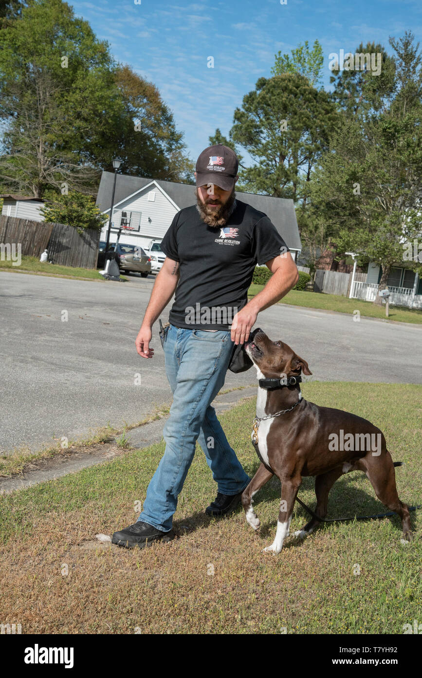Canine Revolution dog trainer working with a dog.  Summerville, South Carolina. - Stock Image