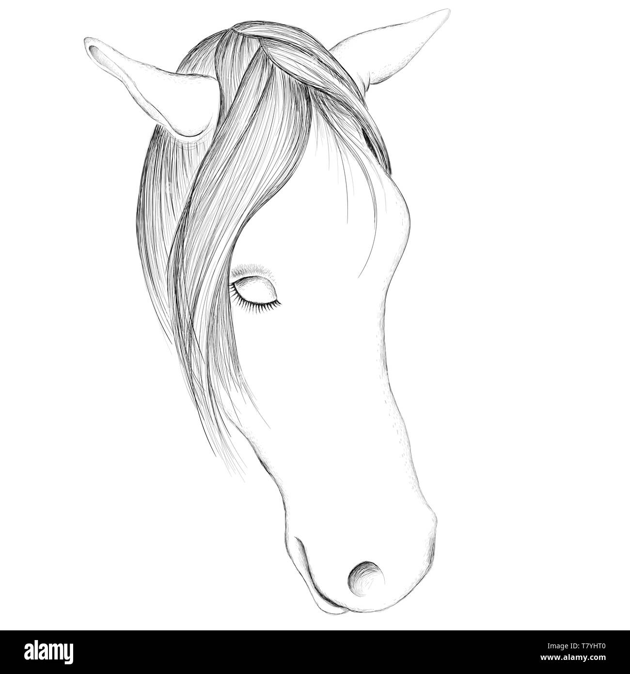 The Vector logo horse for tattoo or T-shirt print  design or outwear.  Hunting style horse background. Stock Photo