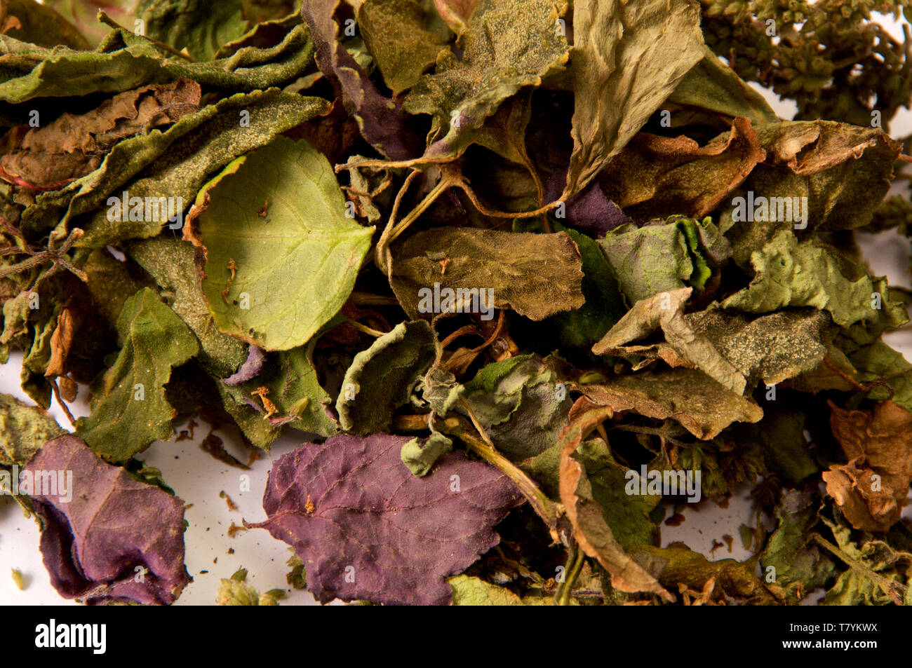 Close up detailed image of  dried colorful Patchouli, Pogostemon cablin, leaves and flowers used for aromatherapy and incense. Member of the mint dead - Stock Image