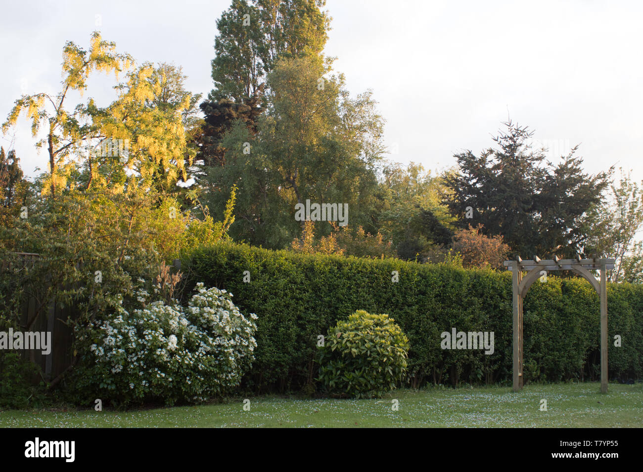 Shrubs Hedge And Trees In An English Garden Stock Photo
