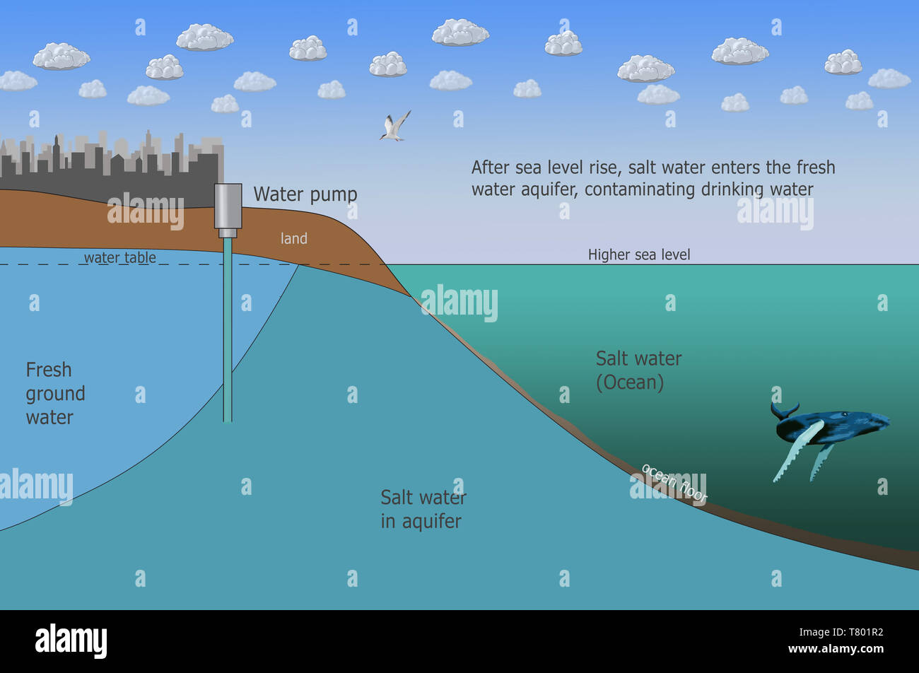Salt Water Intrusion, Higher Sea Level, Climate Change, Illustration - Stock Image
