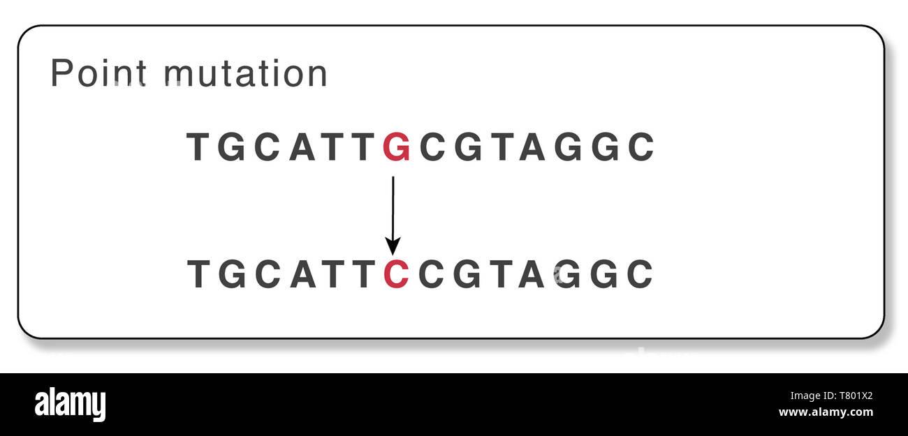 Gene Point Mutation, Illustration - Stock Image