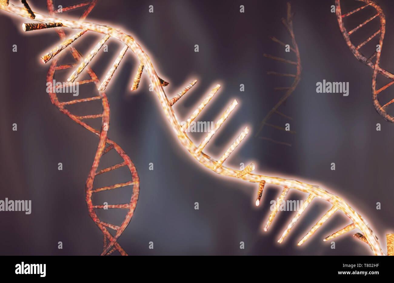 RNA, Illustration - Stock Image