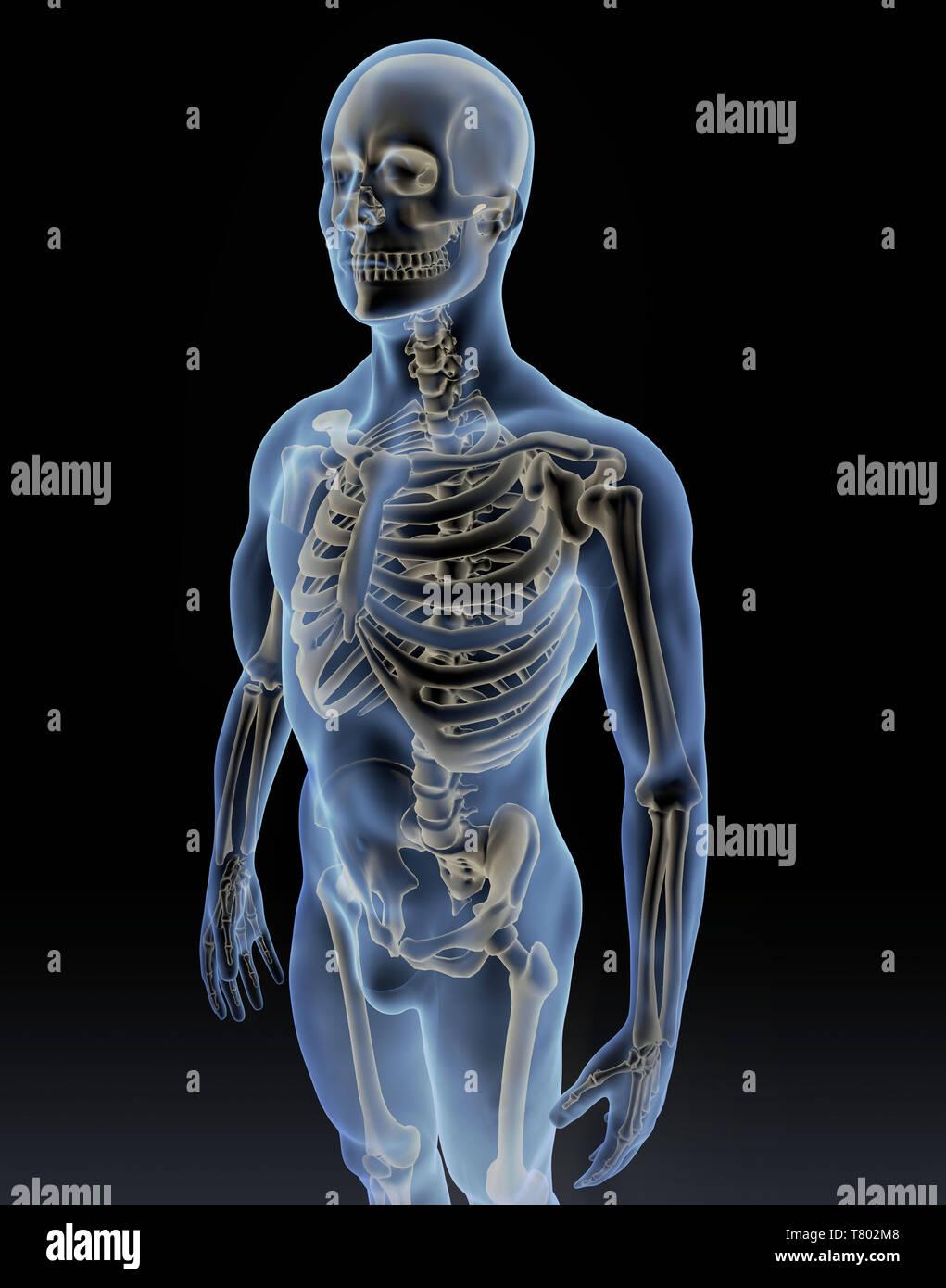 Man with Visible Skeleton, Illustration - Stock Image