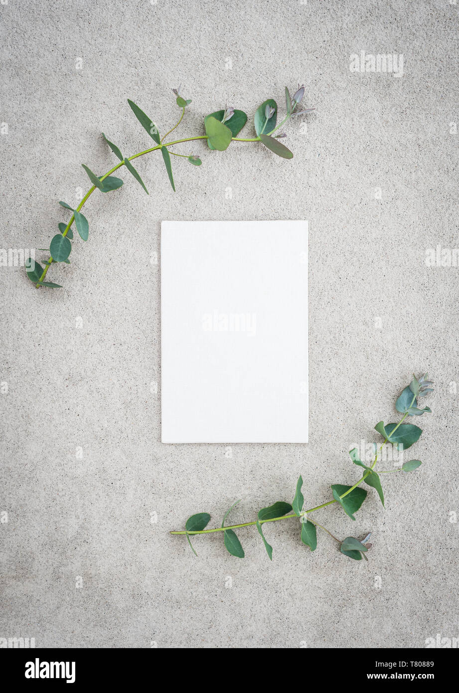 Blank canvas with copy space and eucalyptus branches, on concrete background. Stock Photo