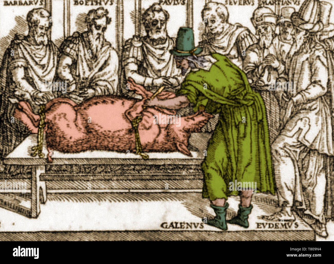 Galen Dissecting Pig - Stock Image