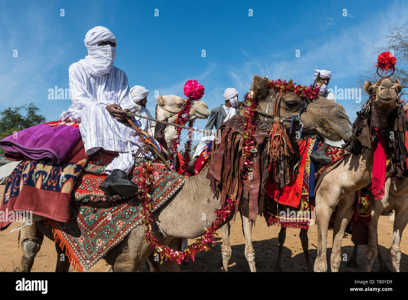 Colourful camel riders at a Tribal festival, Sahel, Chad, Africa - Stock Image