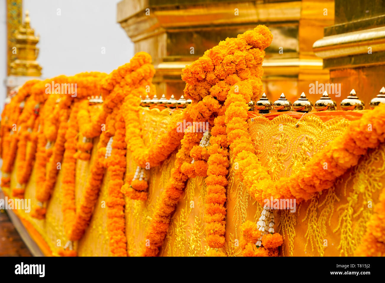 Thai calendula craft garland handmade hang on to pagoda barricade covered by yellow gold cloth. Stock Photo