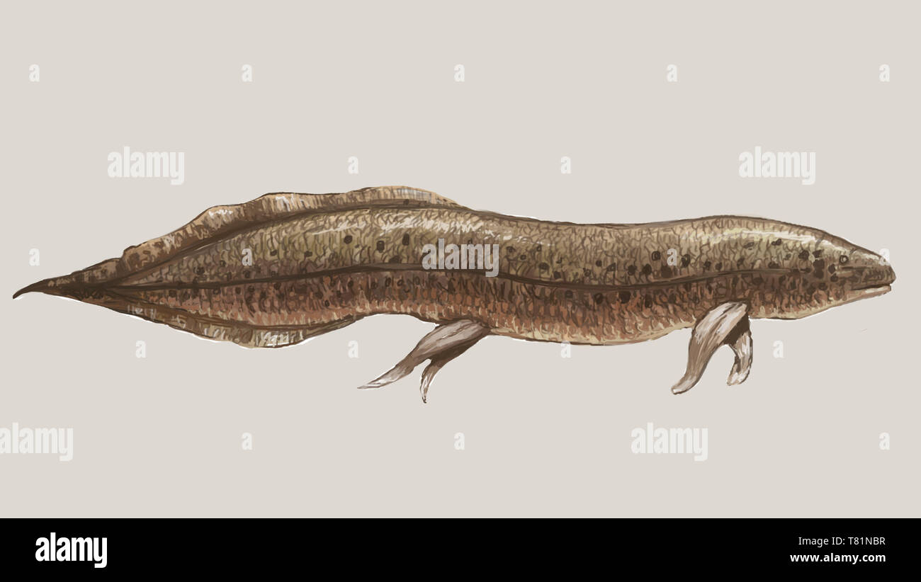 Lungfish, Illustration - Stock Image