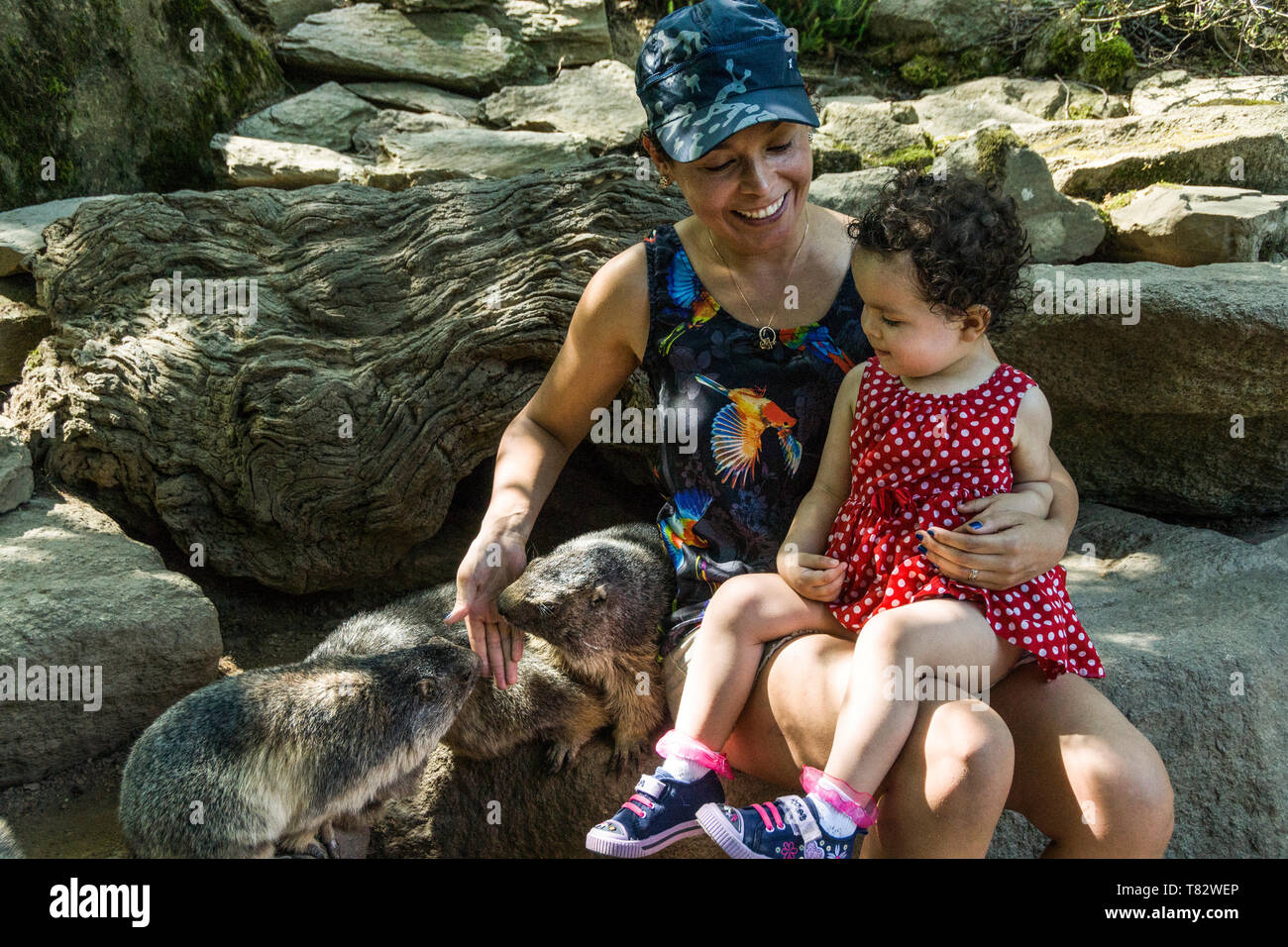 A mother and her daughter get to know the alpine marmots at the zoo at Argelos-Gazost in Hautes-Pyrenees in Southwest France. - Stock Image