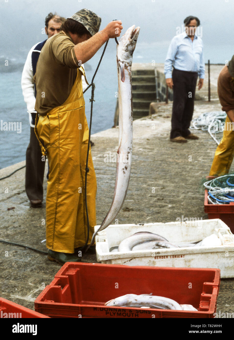 Cornwall,England.Fisherman with his Conger eel (Conger conger) catch. - Stock Image