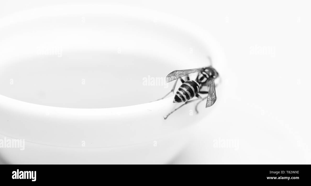 Natural honey and bee close up. Bee or wasp on cup of honey white background. Sweet natural nectar. Healthy food and lifestyle concept. Natural and organic product. Natural sweetener. Honey producing. - Stock Image