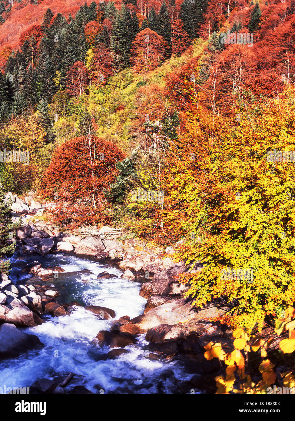 Autumn in the French Pyrenees.Gave de Cauterets in the Valley de Jeret. Hautes-Pyrenees.France. - Stock Image