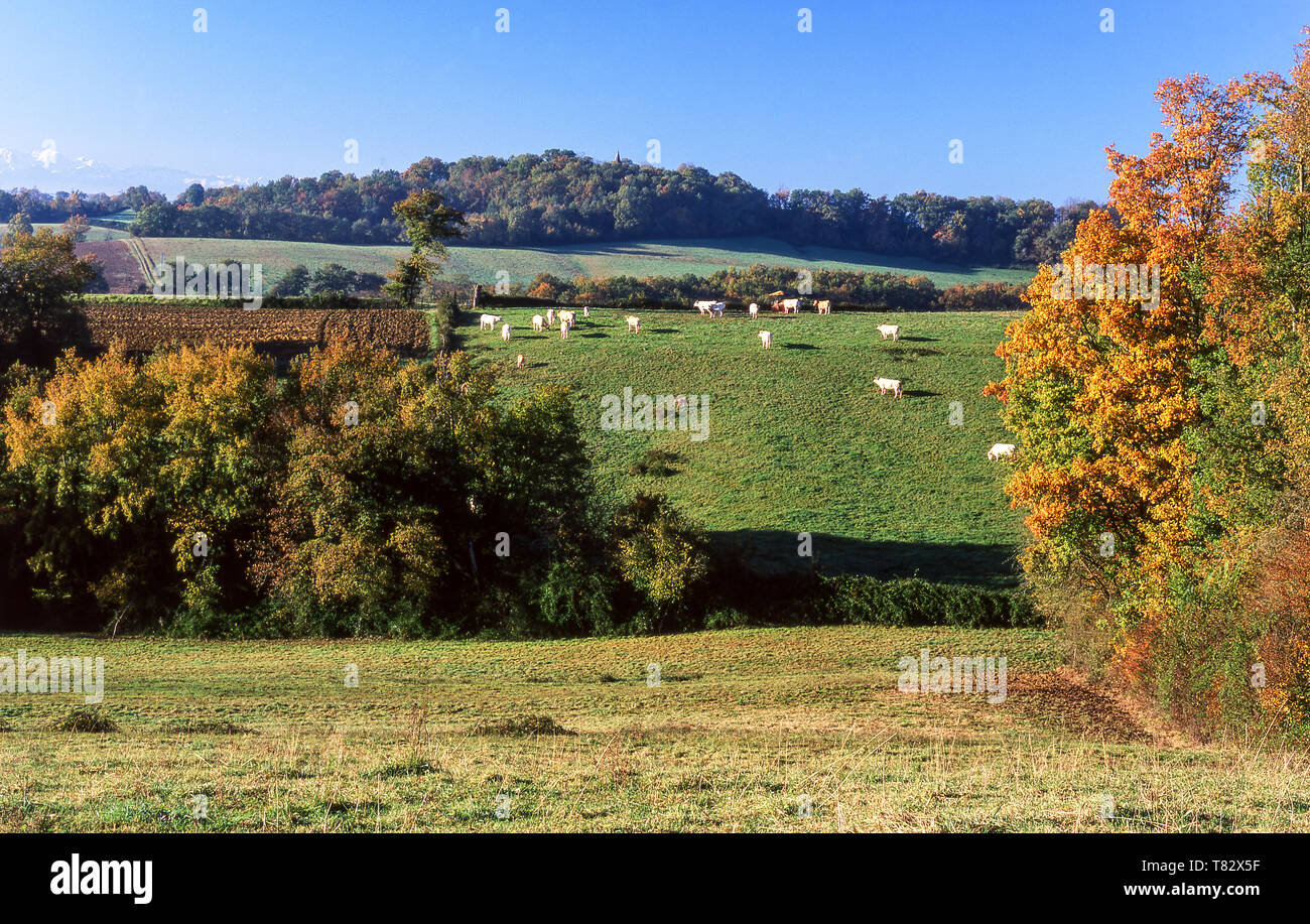 Foothills of the Pyrenees.Photo from near Pontacq which is 10k north of  Lourdes.Southwest France. - Stock Image
