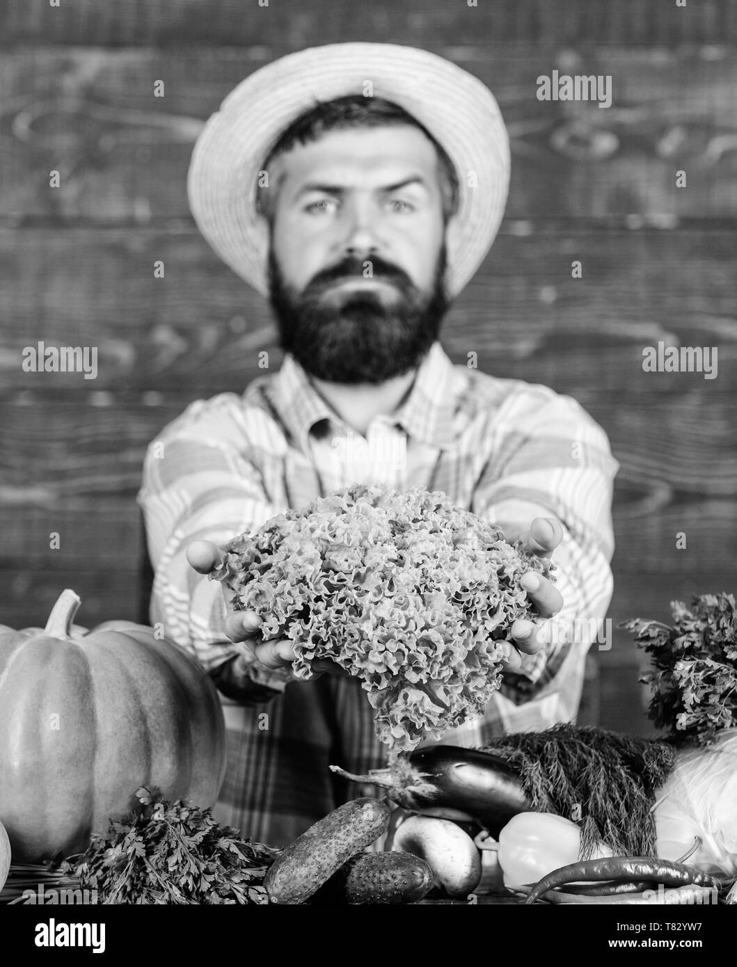 Man mature bearded farmer hold vegetables wooden background. Sell vegetables. Local market. Locally grown crops concept. Buy vegetables local farm. Typical farmer guy. Farm market harvest festival. - Stock Image