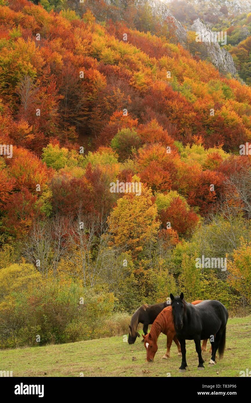 Spain, Asturias, Lena, horses in an autumn landscape Stock Photo