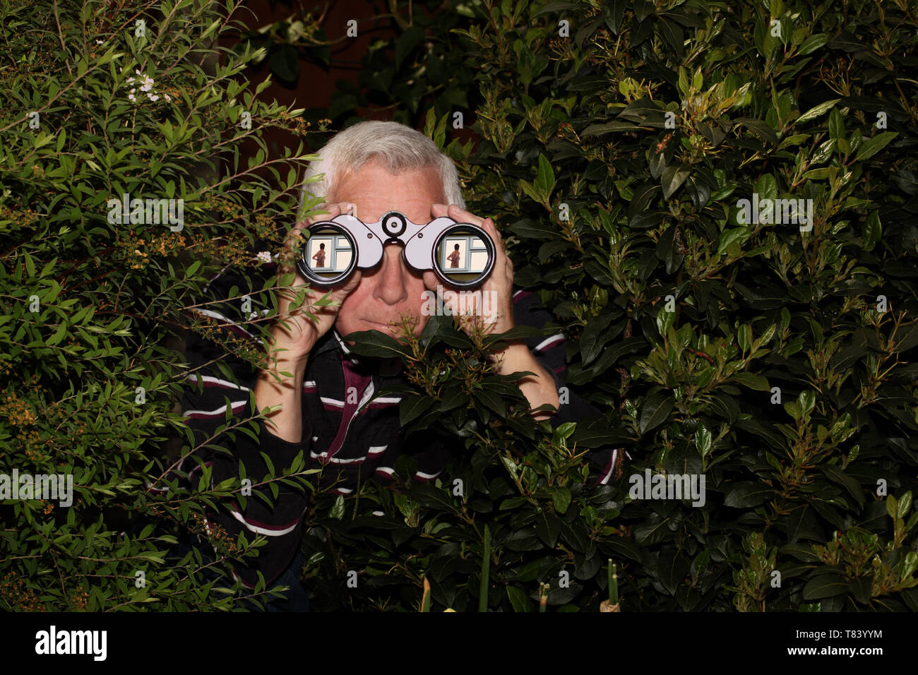 A grey haired man hiding in bushes and spying on a partially dressed woman through binoculars - Stock Image