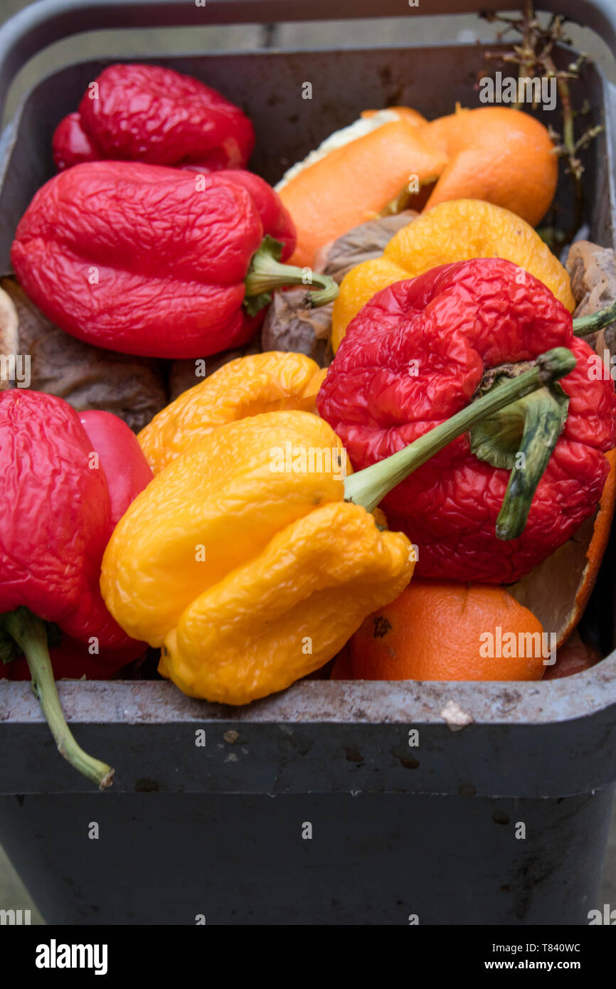 Home kitchen wast food in a recycling bin Stock Photo