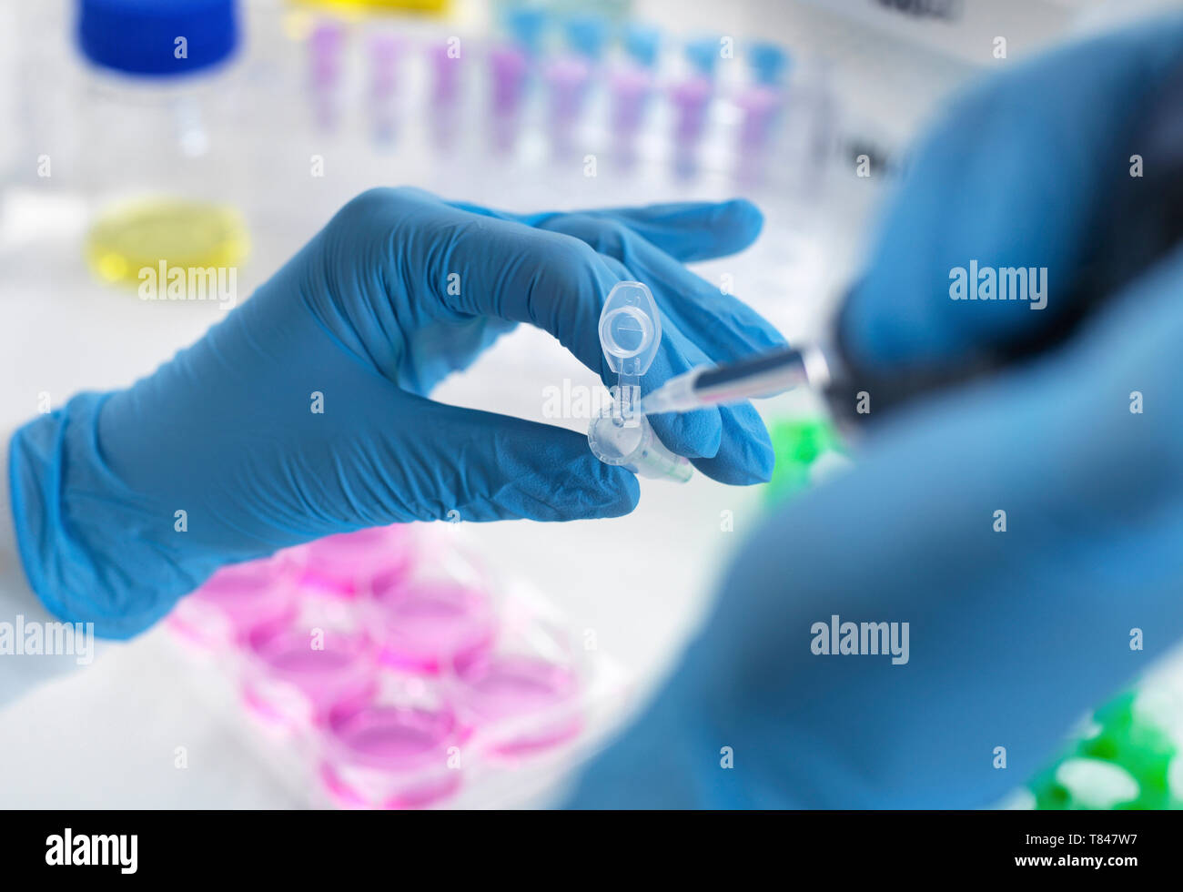 Biotechnology research, scientist pipetting sample into vial for analysis in laboratory, close up of hands - Stock Image